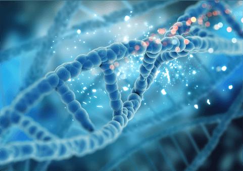 Diagnóstico Genético Pré-implantacional Florianópolis - Dra. Mila Cerqueira